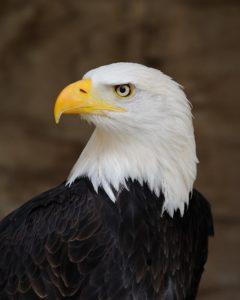 Eagle Eye ESA NEPA